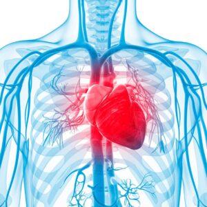 vdohnovenie-clinic_heart